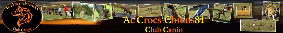 Ac'Crocs-Chiens81